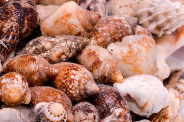 Background of sea shells