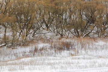 Winter forest, tree, snow, landscape, countryside, field