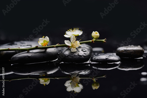 Poster Spa branch cherry blossom with therapy stones