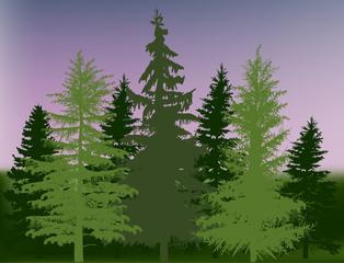 green fir trees forest under dark sky