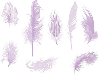 eight lilac feathers isolated on white