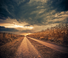 road through stormy corn field to horizon