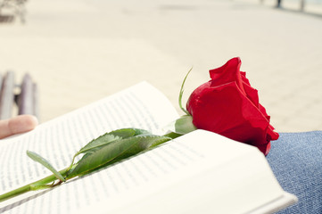 book and red rose for Sant Jordi, Saint Georges Day, in Cataloni