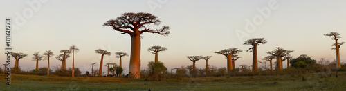 Baobab Alley - Madagascar