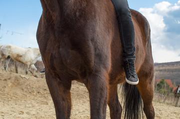 Girl sitting on horse - only legs