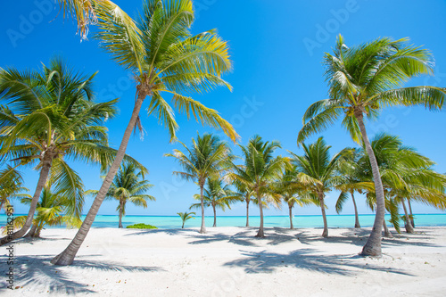 Papiers peints Caraibes Idyllic tropical beach with palm trees
