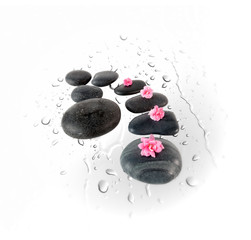 Black spa stones and pink flowers on water drops