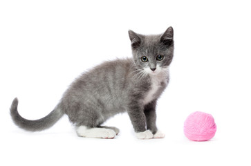 Kitten with a ball of yarn