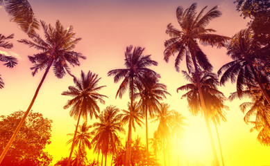 Golden sunset, nature background with palms.