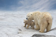 family of polar bears to stand on snow - 81172390