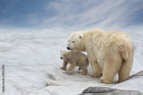 Deurstickers Ijsbeer family of polar bears to stand on snow