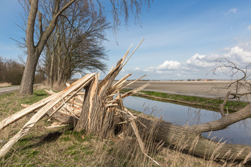 Dutch farmland with blown down tree after heavy spring storm