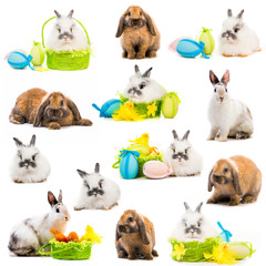rabbits and  Easter eggs in a basket