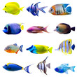 Leinwandbild Motiv Tropical fish collection
