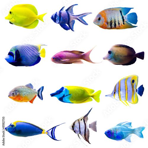 Foto op Canvas Onder water Tropical fish collection