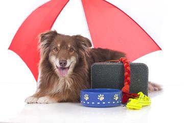 Hund mit Reiseutensilien