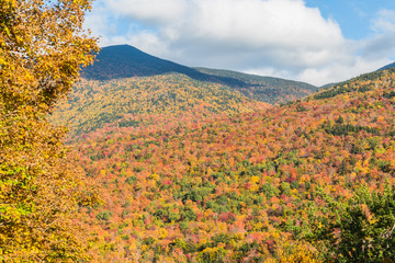 Endless autumn forest