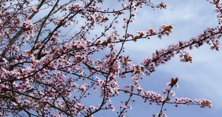 Blütenreicher Frühling