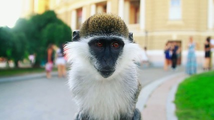 Monkey see in the camera