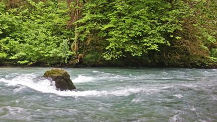 River in Caucasus mountains forest, near lake Ritsa, Abkhazia