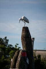 Fauna della laguna veneta, Venezia, Veneto, Italia