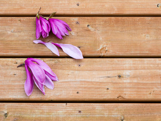 Pink and purple magnolia flowers on wooden deck