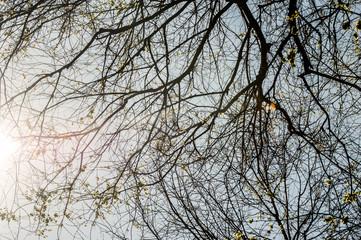Ramificazione albero