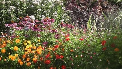 Summer flowers in Wildflower Cottage Garden in Summertime
