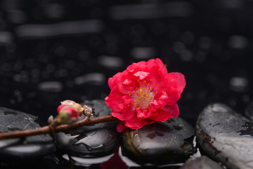 Still life with branch red sakura flowers with therapy stones