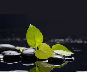 Green leaf with zen stones on wet black background
