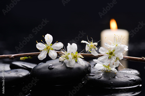 Poster Spa Still life with branch with blossoms. with white candle