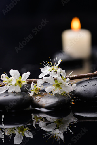 Poster Spa Set of branch with blossoms with white candle