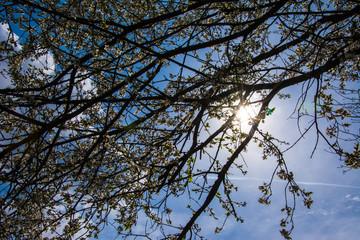 Sonnenstrahlen durch Frühlingsbaum