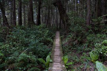 Legendary West Coast Trail in Canada