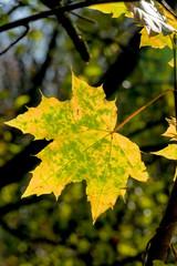 ein Blatt im Herbst