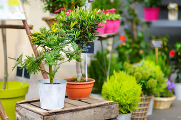 Beautiful flowers sold on outdoor flower shop