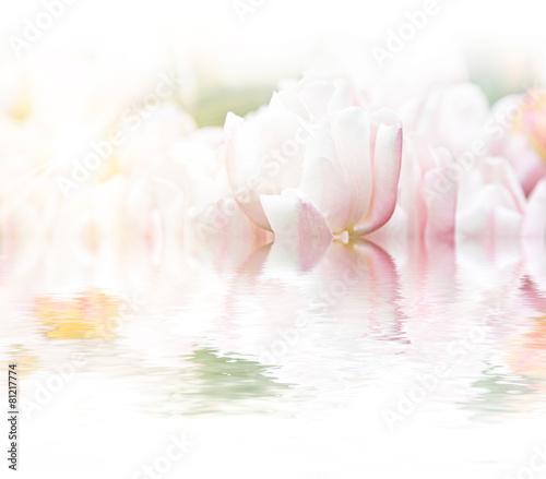 Wunderschöne Tulpen © Thaut Images
