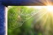 Das Netz einer Spinne - 81218341