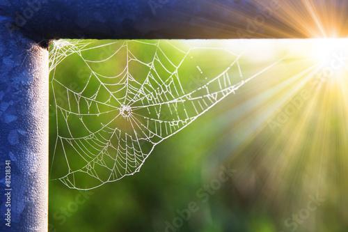 Leinwanddruck Bild Das Netz einer Spinne