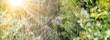 Leinwanddruck Bild - Das Netz einer Spinne