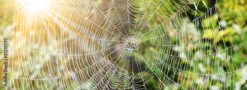 Das Netz einer Spinne - 81218597