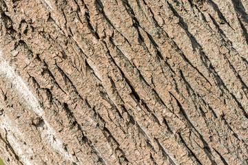 Tree Bark Background Texture Close Up