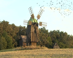 Birds flying over windmills