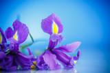 beautiful bouquet of flowers irises