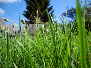 green grass on the background of blue sky