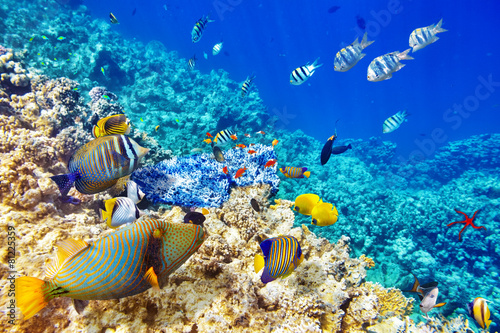 Underwater world with corals and tropical fish. - 81225359
