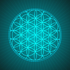 Vector Flower of Life Mandala Illustration for Meditation