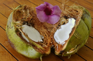 Coconut and tropical flower