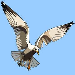 white bird seagull in flight