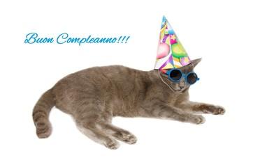 Cartolina d'auguri di buon compleanno con gatto